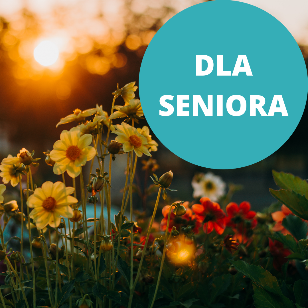 """Żółte i czerwone kwiaty ogrodowe w blasku zachodzącego słońca. Napis """"Dla seniora"""". Kliknij, aby przejść dalej."""